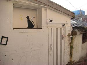 路地裏で黒猫さん発見.jpg