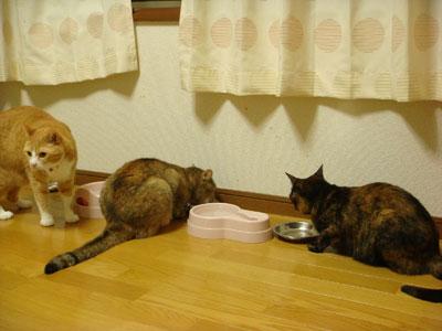 お腹いっぱい!.jpg