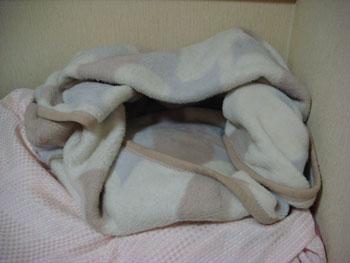 毛布猫ちぐら.jpg