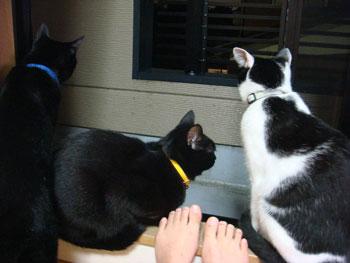 猫と汚足.jpg