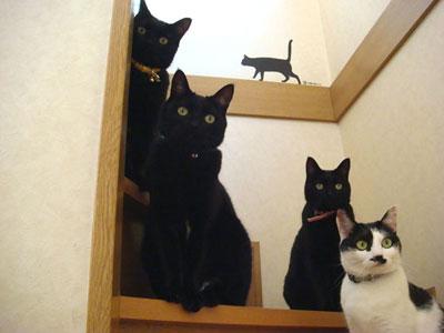 黒猫増量?.jpg